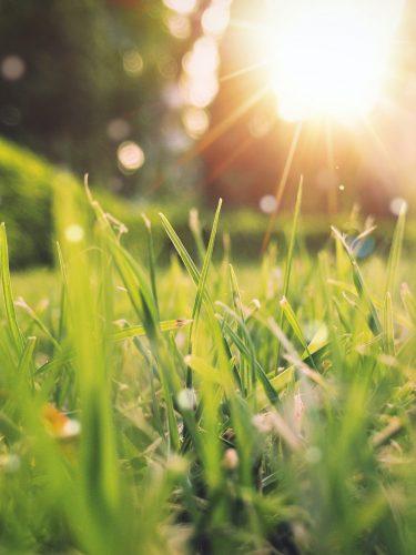 5 tips tegen hooikoorts